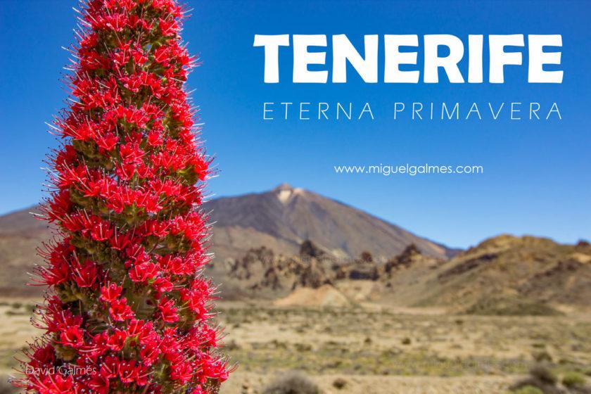 Tenerife, eterna primavera.